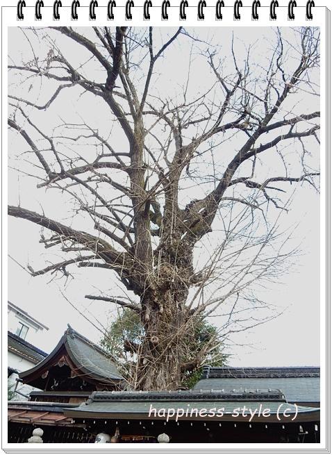 大将軍神社樹齢800年のイチョウのご神木