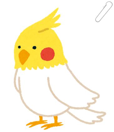 鳥(オカメインコ)の画像